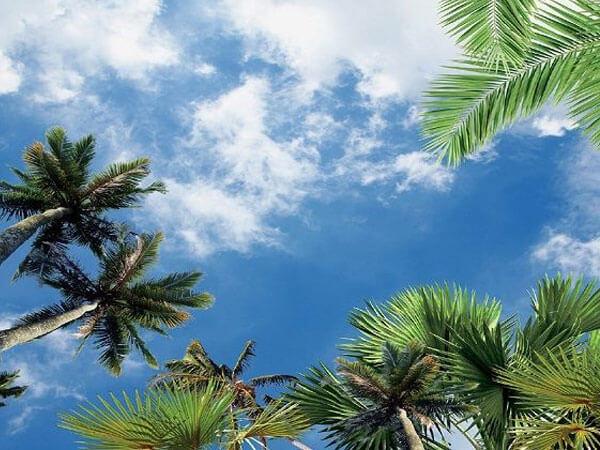 طرح طبیعت در آسمان مجازی
