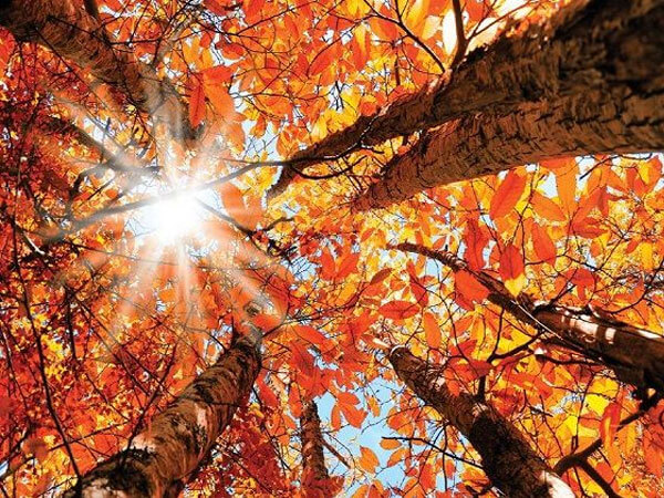 طرح پاییزی