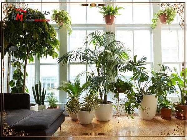 گل ها و گیاهان و پاکسازی هوا