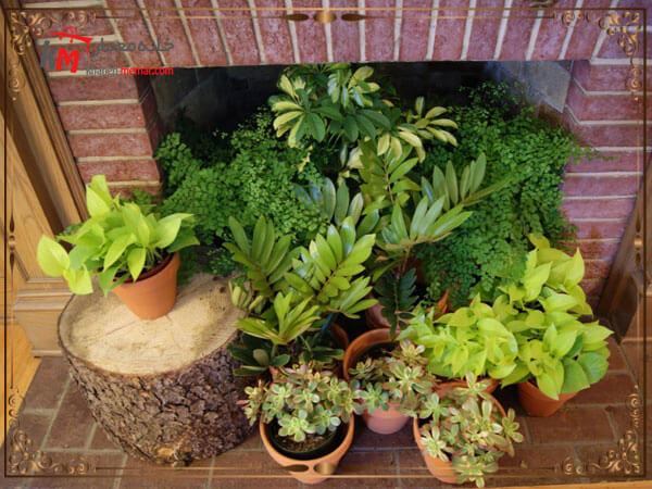 گیاهان، ابزاری عالی برای خلق نقاط کانونی